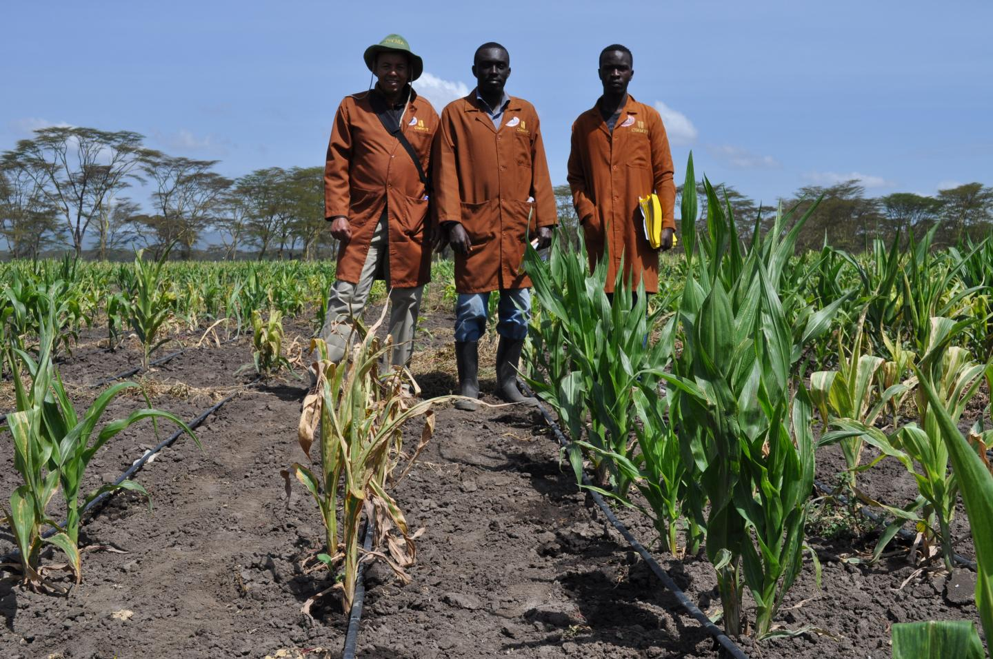 Open-source tools accelerate plant breeding in developing countries