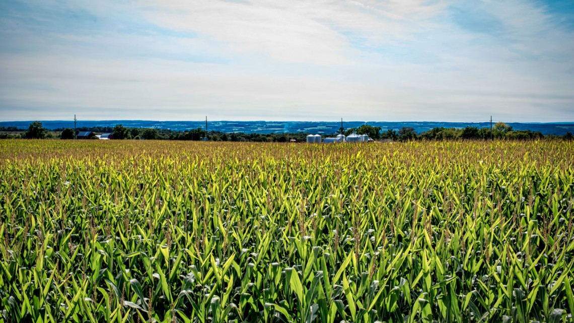 Cornell newspaper article on GOBii Project: New genomic tools help improve staple crops worldwide